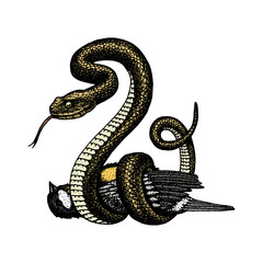 Viper snake. serpent cobra and python, anaconda or viper, royal. engraved hand drawn in old sketch, vintage style for sticker and tattoo. ophidian and asp.