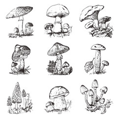Mushroom set hand drawn engraved. vintage organic vegetarian food. champignon, chanterelles, honey fungus, fly agaric, amanita, common stinkhorn, penny bun, red-capped scaber stalk for menu, packaging