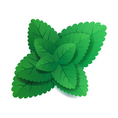 Mint leaves on white background.