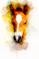 cub horse face on abstract background. Color effect.