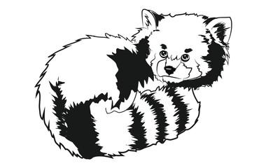 Vector illustration of red panda cartoon style. Vector Illustrated Portrait of Red Panda also called Red Bear-Cat.