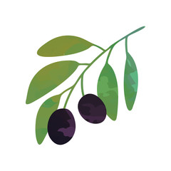 Flat vector illustration of branch with black olives and green leaves. Cartoon graphic design for brand label, logo or decoration