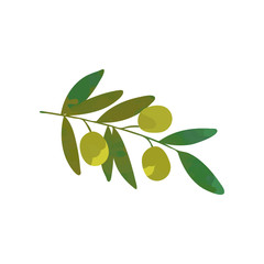 Cartoon branch of olive tree with green leaves. Traditional symbol of peace. Organic food product. Isolated flat vector.