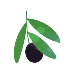 Isolated flat vector illustration of green branch with black olive and leaves. Organic vegetarian food concept. Greek sign. Natural design element for invitation card, logo or product label