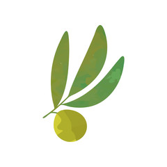 Small olive branch with green leaves isolated on white. Agricultural symbol. Healthy food concept. Natural graphic design. Cartoon flat vector
