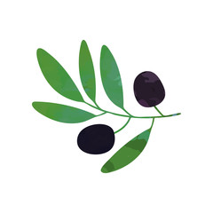 Black olives on branch with leaves. Organic and healthy food design. Flat element for oil label, company logo or cosmetics emblem. Vector