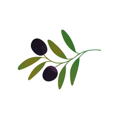 Vector decorative branch with black olives and green leaves isolated on white. Healthy food. Organic care cosmetics.