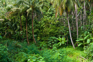 Coconut palms trees and green plants in the tropical forest at Island in Thailand