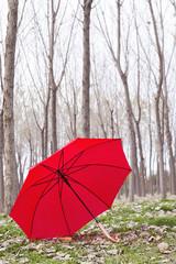 ormandaki şemsiye