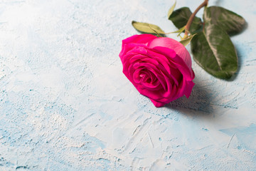 Valentines day background. Pink roses over blue texture. copy space