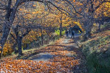 Senderísmo / Hill walking. Castañar de Parauta. Málaga