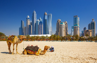 Foto op Plexiglas Dubai The camels on Jumeirah beach and skyscrapers in the backround in Dubai,Dubai,United Arab Emirates