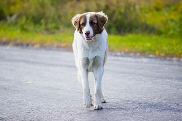 dogs running on the autumn road