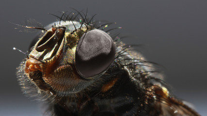 Задумчивая муха