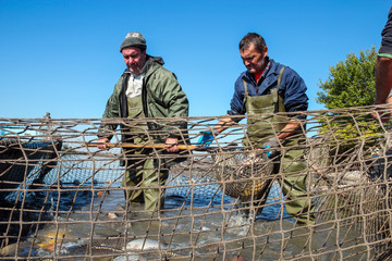 Fisherman Retrieves Fishes With Landing Net