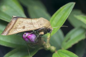 macro closeup butterfly