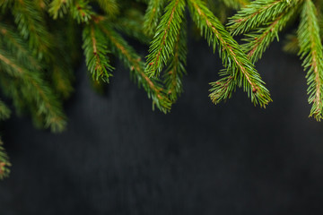 spruce and black background. Wooden background. Christmas of the heart. Black background. Beautiful fir