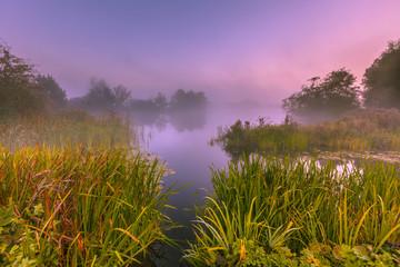 Foggy Marshland