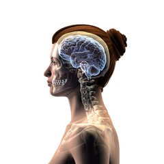 Profile of Woman's Head with Skull and Brain on White Background