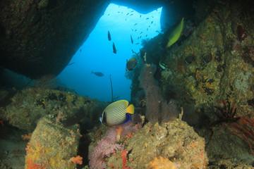 Fish coral reef ocean underwater