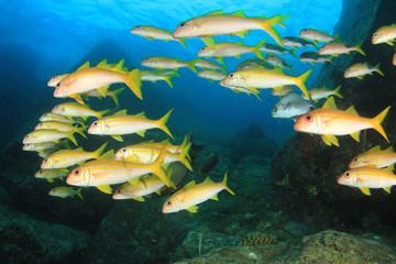 Coral reef underwater in ocean with fish