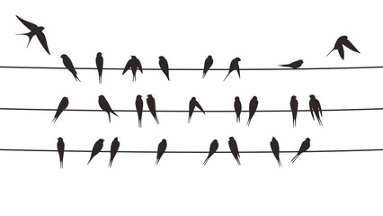 flock swallows on the electric wire, vector illustration