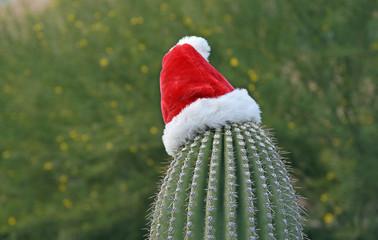 Saguaro-Kaktus mit einer Weihnachtsmannmütze