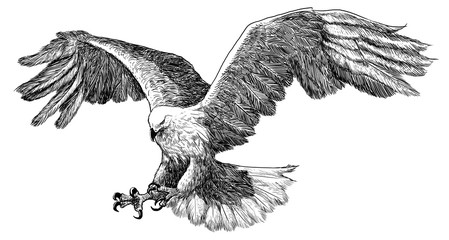 Eagle landing hand draw sketch black line on white background illustration.