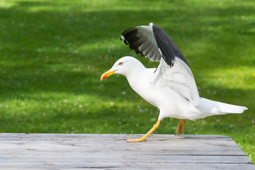 Seagull on table in park