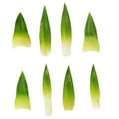 set of leaves of pineapple isolated
