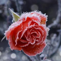 Blumen 885