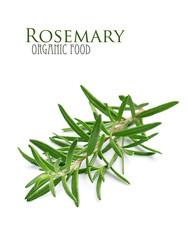 Rosemary herbs.