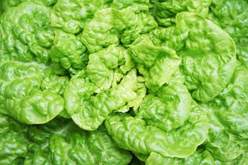 green lettuce texture
