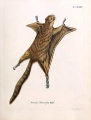 Illustration Of Squirrels.
