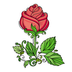 vector hand drawn sketch style elegant vintage red rose wild flower with stem, green leaves and blooming blossom. Isolated illustration on a white background.