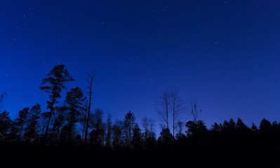 Night over the forest