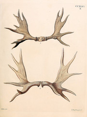 Illustration of a deer
