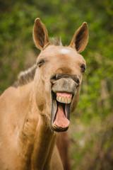 funny horse portrait