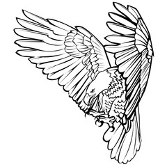 Bald eagle attack swoop landing hand draw black line on white background vector illustration.
