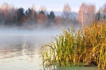 утренний туман на реке с камышом осенью, Россия, Урал