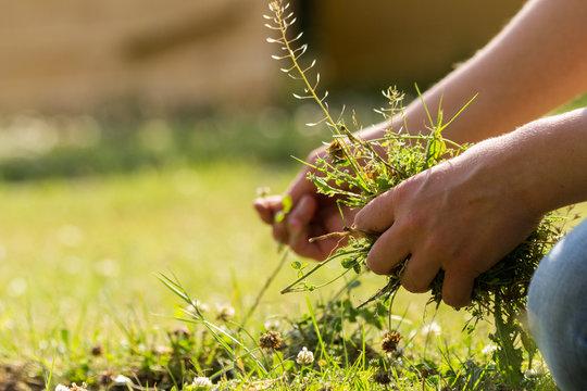 Frau im Garten bei der Gartenarbeit