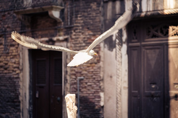 Seagull Taking Flight In Venice