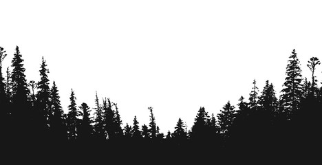 forest silhouette.View to realistic trees.Vector monochrome version