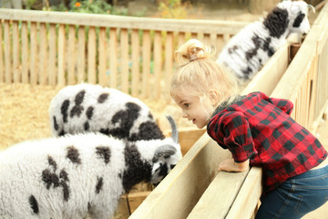 Cute little girl looking at sheep on farm