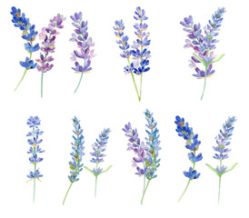 Set of watercolor lavender flowers on white background