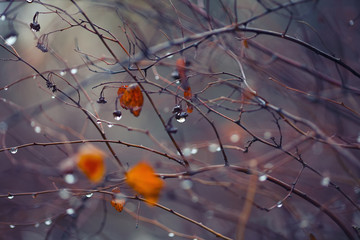 abstract and blurred background with branches and raindrops