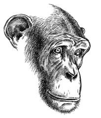 black and white engrave isolated monkey illustration