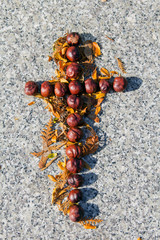 Cross shape made of chestnuts and autumn leaves at the grave. Copy space