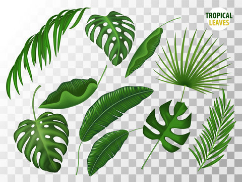 Tropical leaves vector realistic set