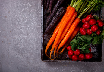 Bunch of fresh Colorful carrots with green leaves,Purple Carrot and Radishes on a grey stone Background. Top view. Vegetable.Food or Healthy diet concept.Vegetarian.Copy space for Text.